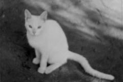 A-White-Cat